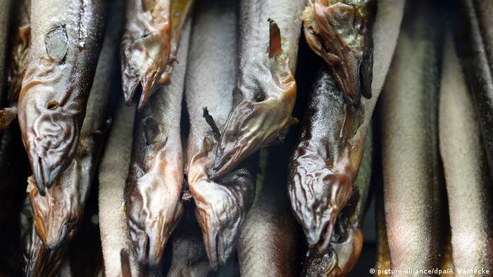 Smoked eel (picture-alliance/dpa/A. Warnecke)