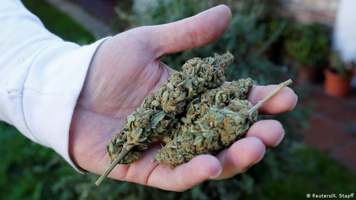 Марихуана пищеварение прорастание семян гидропоники