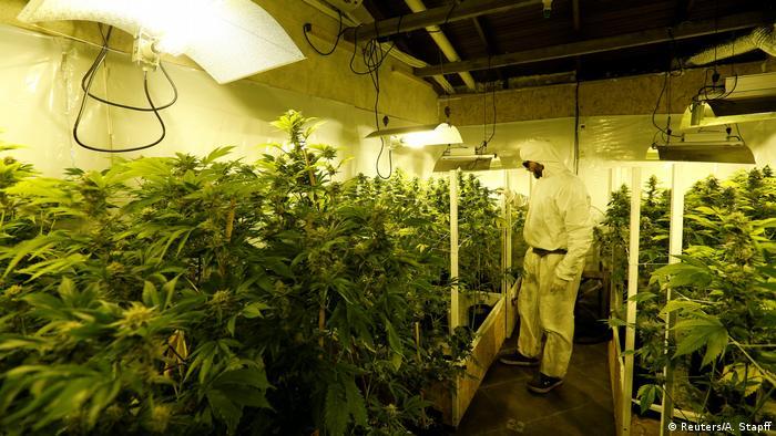 Uruguay startet Marihuana-Verkauf in Apotheken (Reuters/A. Stapff)