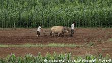 North Korean men work on farm fields along the Pyongyang-Wonsan highway on Thursday, July 20, 2017, in Sangwon, North Korea. (AP Photo/Wong Maye-E) |