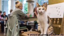 Eine Katze sitzt am 27.07.2017 in Hamburgs erstem Katzen-Café auf einem Stuhl, während sich Besucher an Tischen unterhalten. Nach Nürnberg und München eröffnet nun auch in Hamburg ein Café, in dem die Besucher mit Katzen schmusen und spielen können. Foto: Christina Sabrowsky/dpa +++(c) dpa - Bildfunk+++   Verwendung weltweit