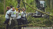 +++Nur im Rahmen der abgesprochenen Berichterstattung zu verwenden!+++ 30 May 2017+++Activists have chained themselves to a forest harvester to stop the government from logging Europe's last ancient forest. © Greenpeace/Grzegorz Broniatowski