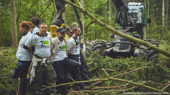 Выкорчевывание деревьев в Беловежской пуще экскаватором