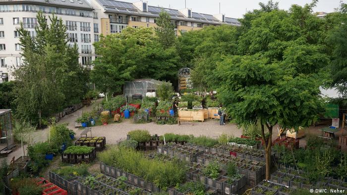 Plantas são cultivados de forma orgânica em engradados no Jardim das Princesas