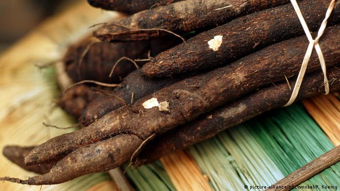 Black salsify (picture-alliance/blickwinkel/R. Koenig)