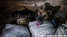 YOGYAKARTA, INDONESIA - JULY 27: (EDITORS NOTE: Image contains graphic content) Dogs are bound in sacks before their slaughter at a dog meat butchery house on July 27, 2017 in Yogyakarta, Indonesia. Indonesians have seen a surprising hike in dog meat sales even though the world's most populous Muslim country does not have a tradition of eating dogs due to their religion. According to reports, an increasing number of people started stealing dogs to sell to meat vendors for additional income, with up to 100,000 dogs slaughtered for consumption every year in Bali using inhumane and unsanitary methods. The sale of dog meat is not illegal in Indonesia, but animal cruelty and the sale of infected meat is, as footage uncovered by animal rights groups recently revealed dogs being kept for days in horrific conditions before being violently slaughtered and sold to unsuspecting tourists at food stalls on Balinese beaches, even though the local government has denied the allegations. Dog meat is known to be popular in some parts of Indonesia and other Asian countries but reports have indicated a surprising contrast with countries like South Korea and China, where the practice of eating dog meat have been increasingly shunned as incomes have risen, while many Indonesians who are too poor to eat livestock, they can still afford dogs or cats for consumption, which consumers believe can cure skin diseases and boost vitality. (Photo by Ulet Ifansasti/Getty Images)