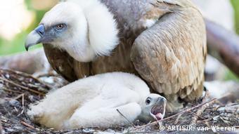 Homosexualität im Tierreich | Geier mit Küken