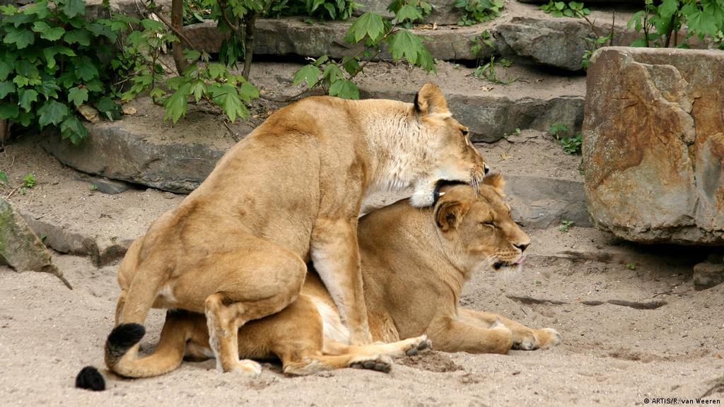 There is no homophobia in the animal kingdom | Environment| All