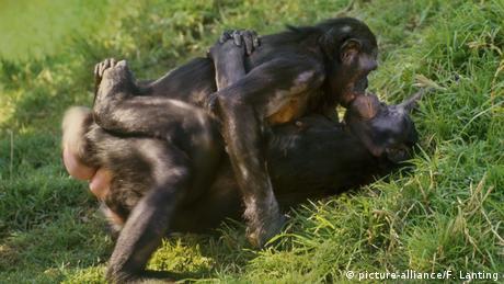 Female bonobos having sex (picture-alliance/F. Lanting)