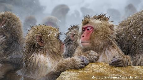 Macaques (picture alliance/robertharding)