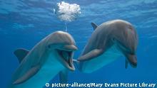 Homosexualität im Tierreich | Tümmler - Bottlenose Delphine