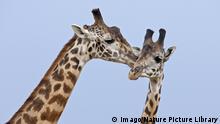 Homosexualität im Tierreich  