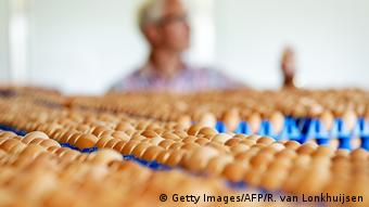 Niederlande Eier-Produktion (Getty Images/AFP/R. van Lonkhuijsen)