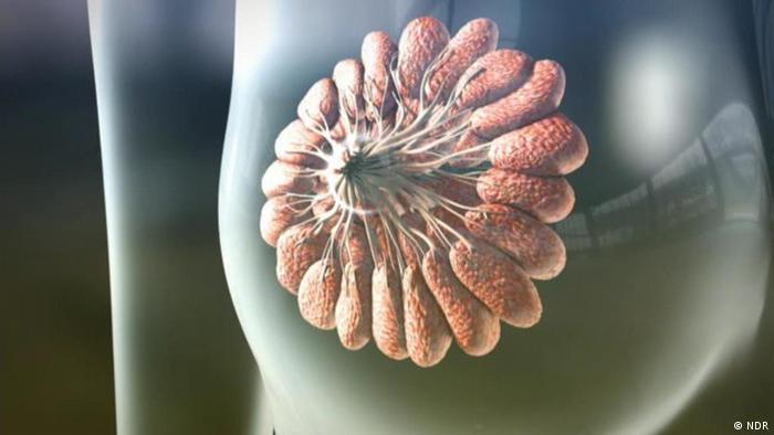 Fit & Gesund - Brustkrebs (NDR)