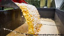 Eier-Vernichtung in den Niederlanden