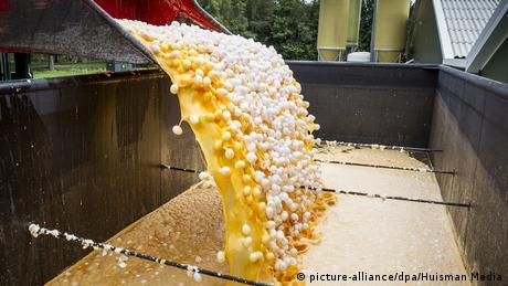 Διατροφικό σκάνδαλο: Πάνω από 10 εκατομμύρια μολυσμένα αυγά στη Γερμανία