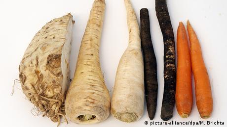 Verschiedenes Wurzelgemüse wie Pastinake, Karotte oder Knollensellerie liegt nebeneinander.