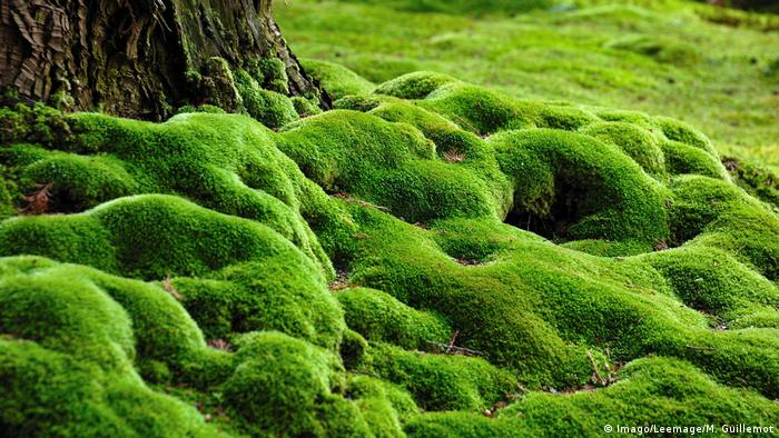 DW Eco@africa   Saiho Ji Moss Garden (Imago/Leemage/M.