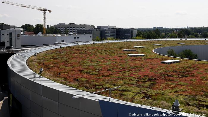 A turf roof at WISTA Adlershof in Germany