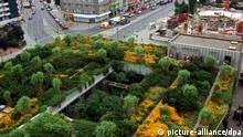 Im Berliner Bezirk Wedding wurden 7000 Quadratmeter Dachfläche der Schering-Betriebsgebäude begrünt. Damit soll eine Verbesserung des örtlichen Klimas durch die Bindung von Staub und die Abgabe von Sauerstoff erreicht werden. (Aufnahme vom August 1991). | Verwendung weltweit