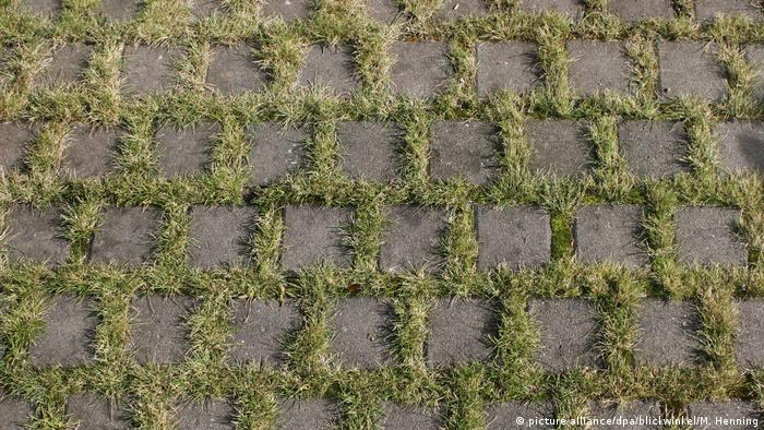 Paving stones with grass