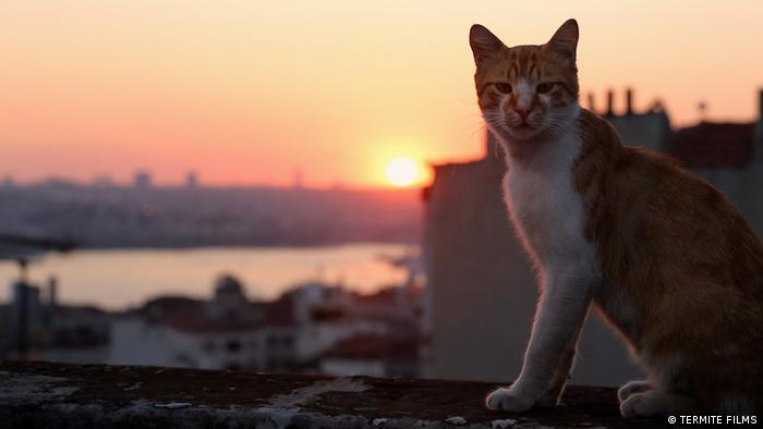 A cat watches the sunset over the Bosporus in 'Kedi' by Ceyda Torun