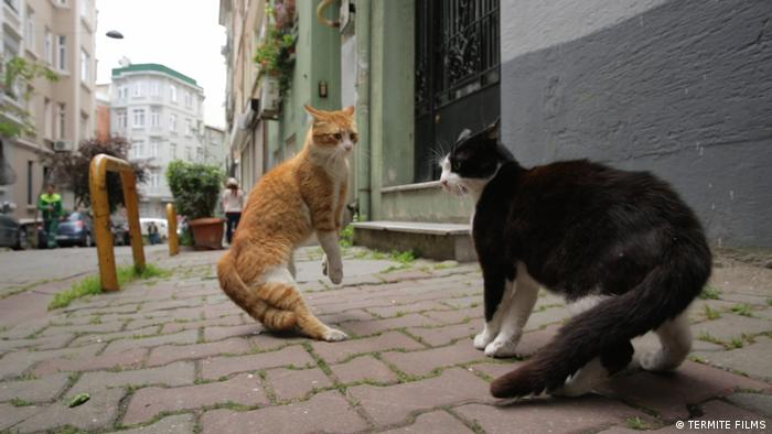Two stray cats face off in 'Kedi' by Ceyda Torun (Termite Films)
