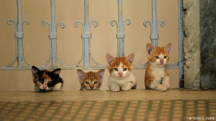 Kittens poke their heads out of a stairwell in 'Kedi' by director Ceyda Torun