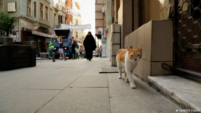 A cat roams the street in a still from the film 'Kedi' by director Ceyda Torun (TERMITE FILMS)