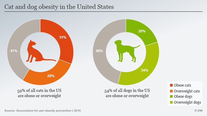 Infographic: overweight cats and dogs in the US