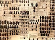 Darwin e a diversidade dos besouros