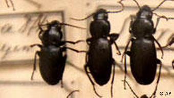 BdT Darwin Ausstellung Käfer
