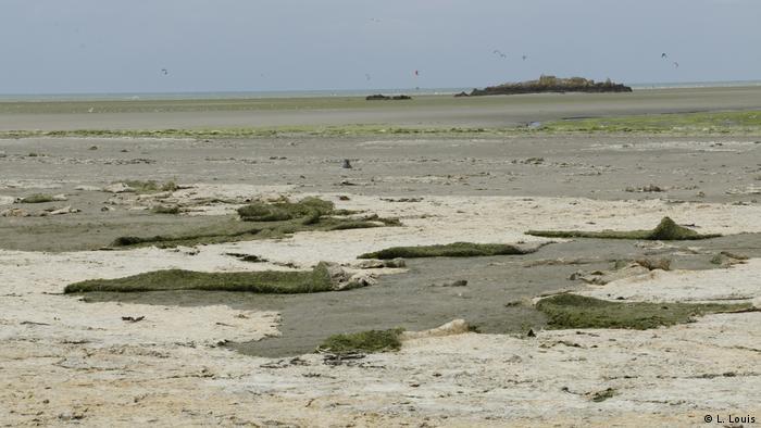 Brittany's algae invasion pits farmers against beach lovers