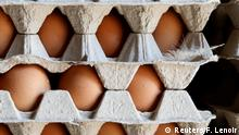 Freshly laid eggs are packed to be put on sale at a poultry farm in Lunteren, Netherlands August 7, 2017. REUTERS/Francois Lenoir
