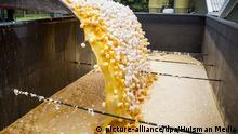 dpatopbilder - Im Auftrag der niederländischen Lebensmittelkontrollbehörde NVWA werden am 02.08.2017 rund eine Million Eier aus einer Geflügelfarm in Onstwedde (Niederlande) zerstört, weil sie mit dem Insektizid Fipronil verseucht sind. Mit Fipronil verseuchte Eier aus den Niederlanden tauchen in Deutschland in immer mehr Bundesländern auf. (zu dpa Niederländische Geflügelzüchter klagen über Eier-Verkaufsstopp vom 03.08.2017) Foto: Huisman Media/dpa  