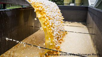 Εκατομμύρια αυγά καταστράφηκαν στην Ολλανδία