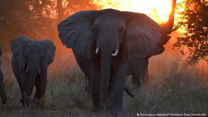 Mosambik - Gorongosa National Park