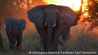 Mosambik - Gorongosa National Park (Gorongosa National Park/Jean Paul Vermeulen)