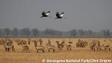 Gorongosa National Park in Mozambique (Gorongosa National Park/Clive Dreyer)
