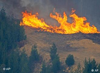 A fire erupts in a pine tree plantation northeast of Melbourne