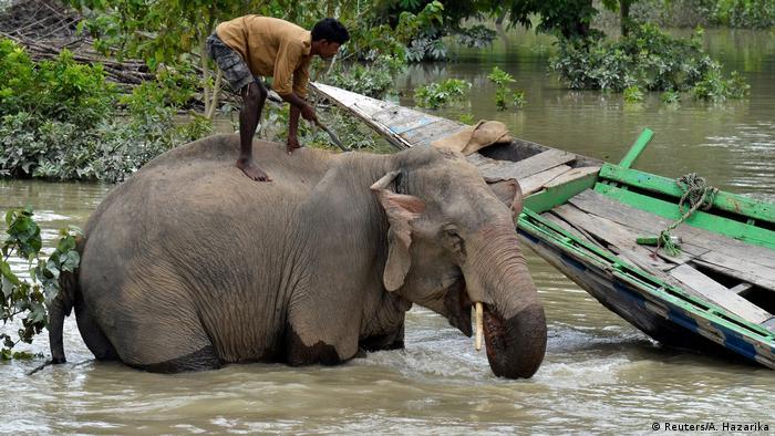 Indien Assam Überflutungen Elefant (Reuters/A. Hazarika)