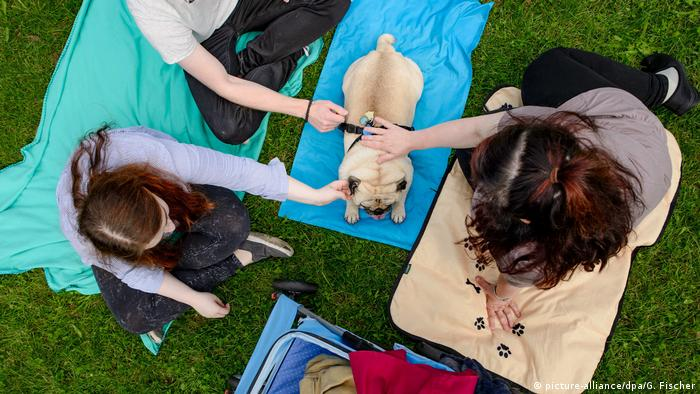People pet a pug at the 8th International Pug Meeting in Berlin