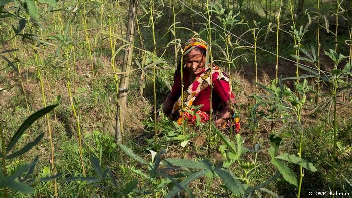 Una mujer con un sari rojo cosechando cultivos orgánicos.
