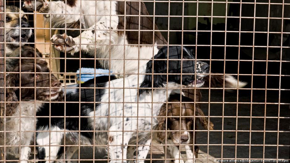 In der Hundepension | Alltagsdeutsch – Lektionen | DW | 20.02.2018
