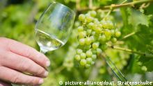 Deutschland | Wein aus dem Hildesheimer Magdalenengarten