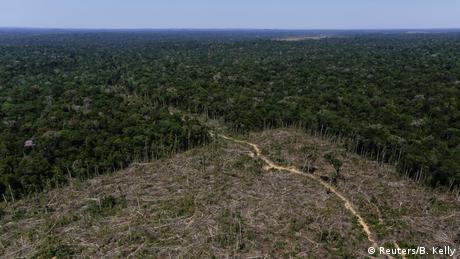 En los últimos doce meses casi 3.000 kilómetros cuadrados de bosque han sido destruidos en la Amazonía brasileña. Según un informe del instituto ambiental Imazon, la deforestación se ha frenado algo, pero todavía se lleva a cabo en grandes dimensiones.