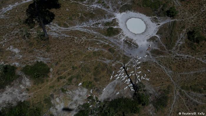 Imagem aérea de área desmatada para criação de gado na Amazônia