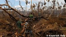 Brasilien Kampf gegen die Abholzung des Regenwaldes