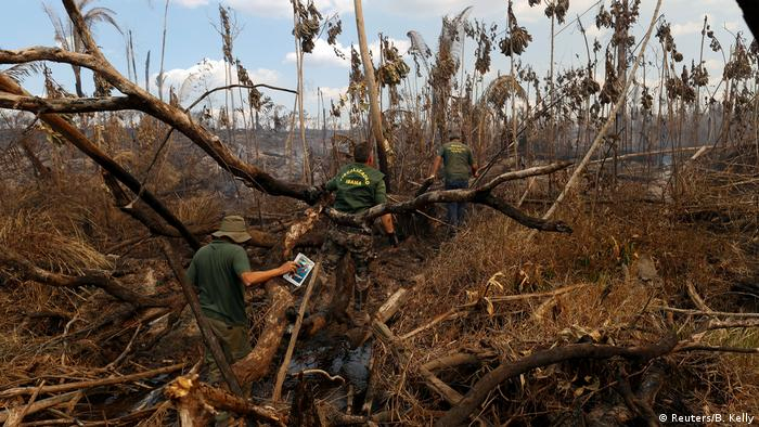 Amazon deforestation: EU firms linked to illegal logging in Brazil ...