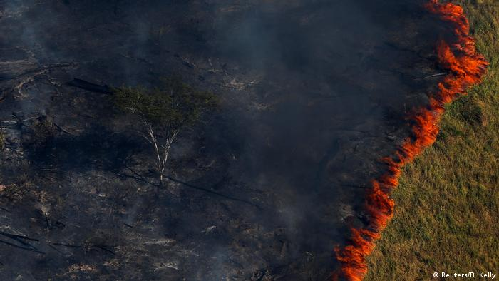 Burning trees in the Amazon rainforest in Brazil